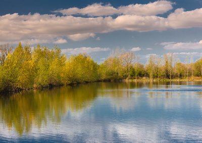 lakepochard